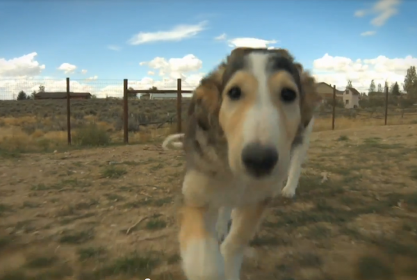 Radost-Borzoi-Video-Production-Tahoe